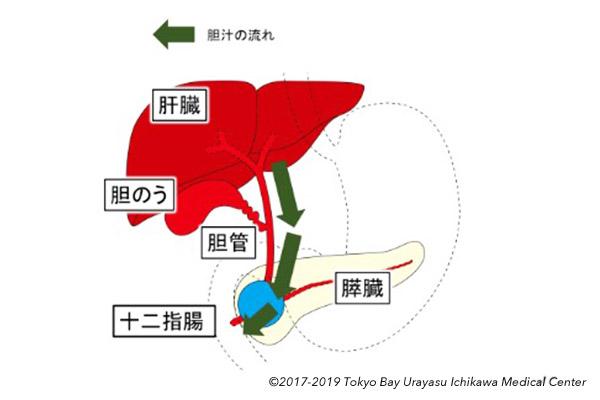 肝 経 ドレナージ 胆嚢 経 皮